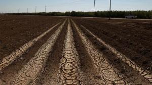 Dried and cracked earth is visible on an unplanted field at a farm near Mendota, California. (Justin Sullivan/Getty Images)