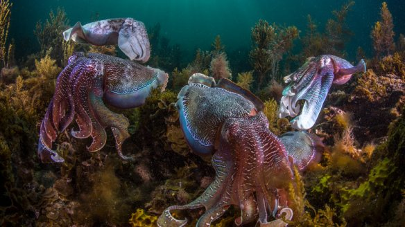 24tb-cuttlefish-master768-v2